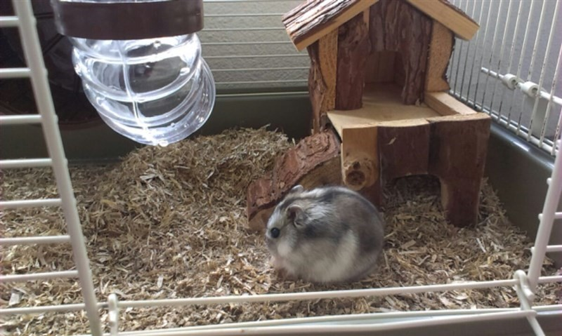 A hamster on easy-living small pet bedding